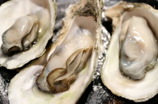 primary-industry-oysters